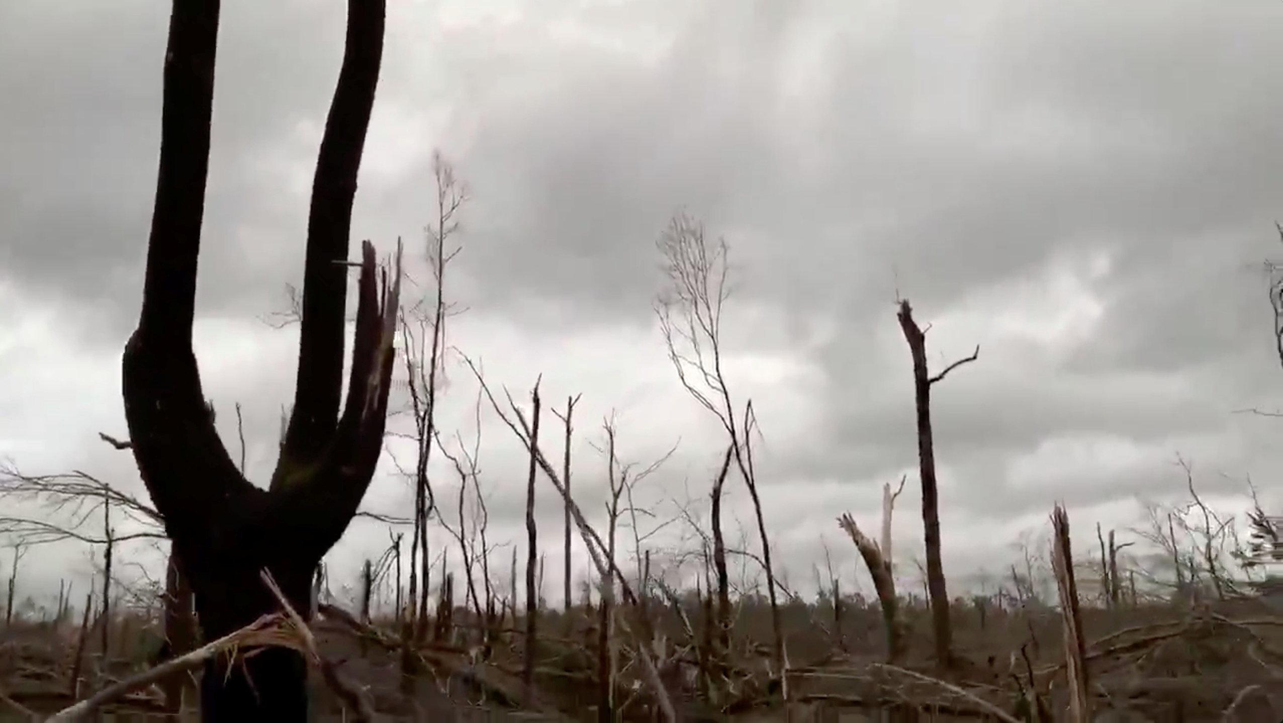 Damaged trees seen following tornadoes in Beauregard.