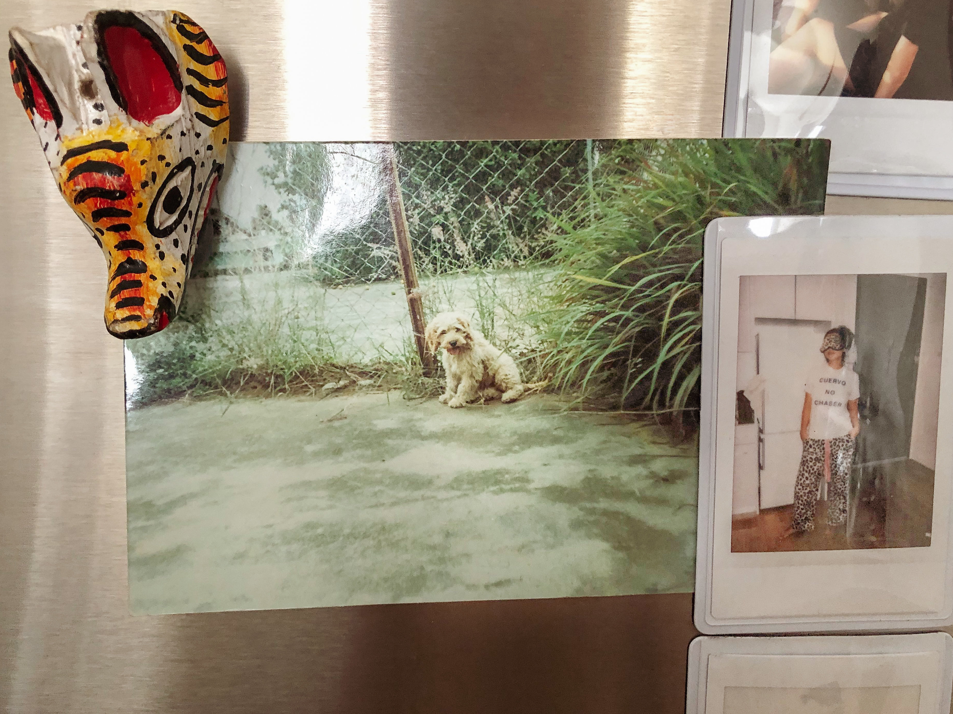A photo of Pancho that I keep on my fridge to remind me of my first love.