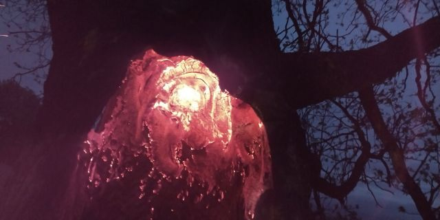 The glowing inside of a tree after it was apparently struck by lighting in Millbury, Mass. early Sunday.