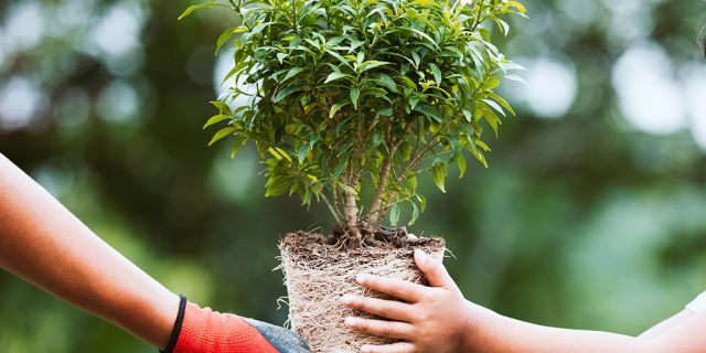A bill that recently passed in the Filipino House of Representatives requires students to plant 10 trees in order to graduate.