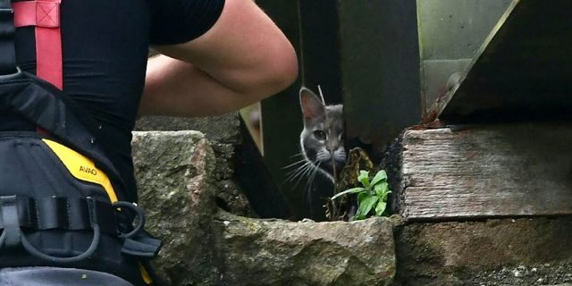 """Hatty, a 5-year-old cat, decided not to be rescued from the Royal Albert Bridge on Friday, and decided to later walk home instead.<br data-cke-eol=""""1"""">"""