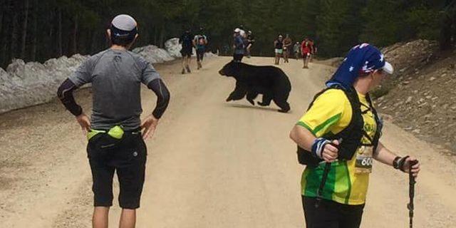 A bear crossed between runners during the Leadville Trail Marathon in Colorado Springs last weekend