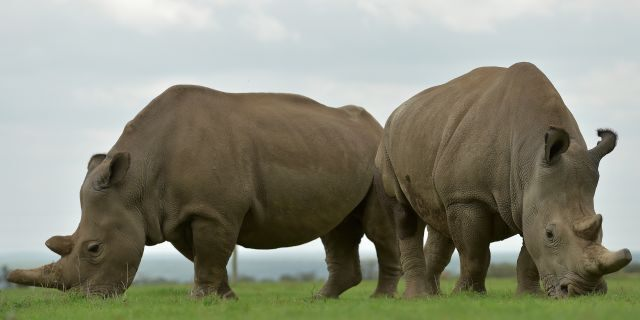 """Tanzania had only 15 rhinos four years ago and was described as """"ground zero"""" of the poaching crisis, but a recent statement said the figure was now at 167."""