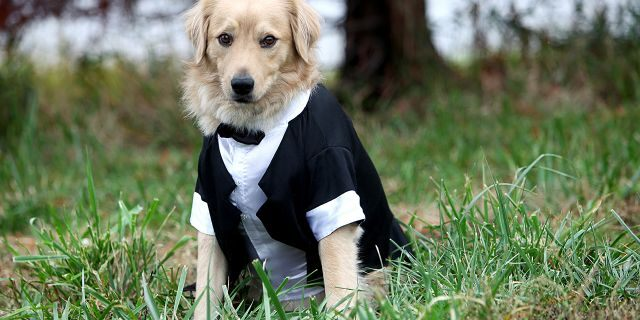 A dog wears a tux in this undated file photo.