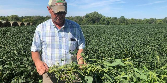 Farmer Randy Miller, seen with his soybeans last week at his farm in Lacona, Iowa. (AP Photo/Julie Pace)