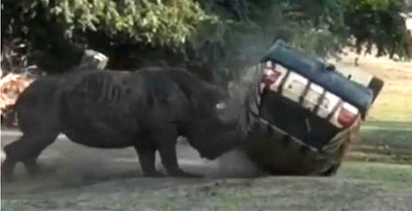 Rhino flips car at German safari park