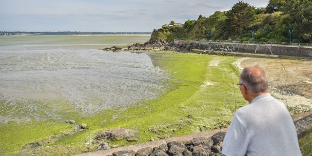 A man looks at toxic seaweeds in the Vallais beach, covered with toxic green algae, near Saint-Brieuc, northwestern France, on July 10, 2019. - Fifty years after their appearance, green algae still arouse anger and associations call for more restrictive measures. (Photo by LOIC VENANCE / AFP) (Photo credit should read LOIC VENANCE/AFP/Getty Images)