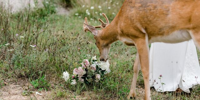 """It's not known whether """"eating the bouquet"""" counts as """"catching the bouquet"""" in terms of wedding traditions."""