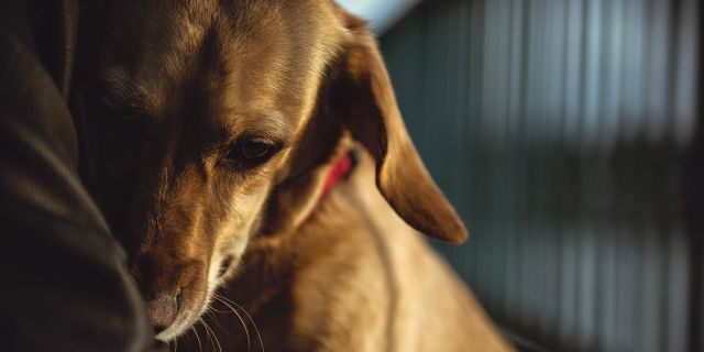 Norway has an estimated 500,000 - 600,000 dogs, according to The Guardian.