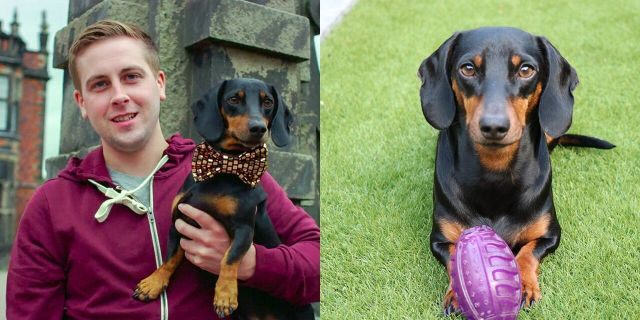 """Paul Lavery, 30, was amazed to discover his dog Harlso's """"hidden talent"""" after jokingly placing a squeaky toy on his head and watching as the pup stood still as a statue."""
