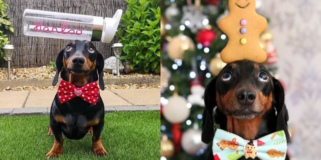 The dog also recently won Northern Ireland's Social Media Personality of the Year – beat several humans for the prize.