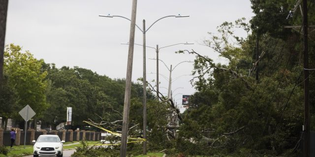 A tree falls on Metairie Road and takes out power lines in New Orleans on Saturday after Tropical Storm Olga went through the area. (Sophia Germer/The Advocate via AP)