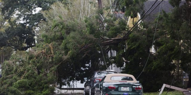 A tree lies on Camp Street by Henry Clay Avenue after Tropical Storm Olga went through the area in New Orleans on Saturday. (Sophia Germer/The Advocate via AP)