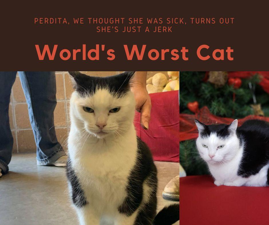 Perdita, in all her crabby glory.