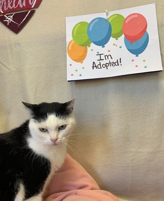 Perdita, looking thrilled about the sign celebrating her adoption.
