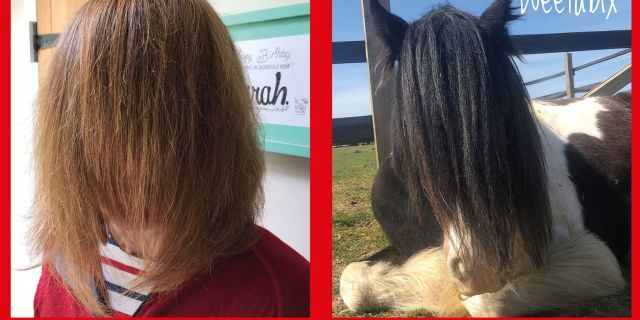 Redwings Horse Sanctuary, which takes care of 1,500 horses at its five visitor centers across the U.K., came up with the funny challenge as a way of continuing to fundraise while their centers are closed.