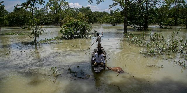 An Indian forest guard on a boat takes away the carcass of a wild buffalo calf through flood water at the Pobitora wildlife sanctuary in Pobitora, Morigaon district, Assam, India, July 16.