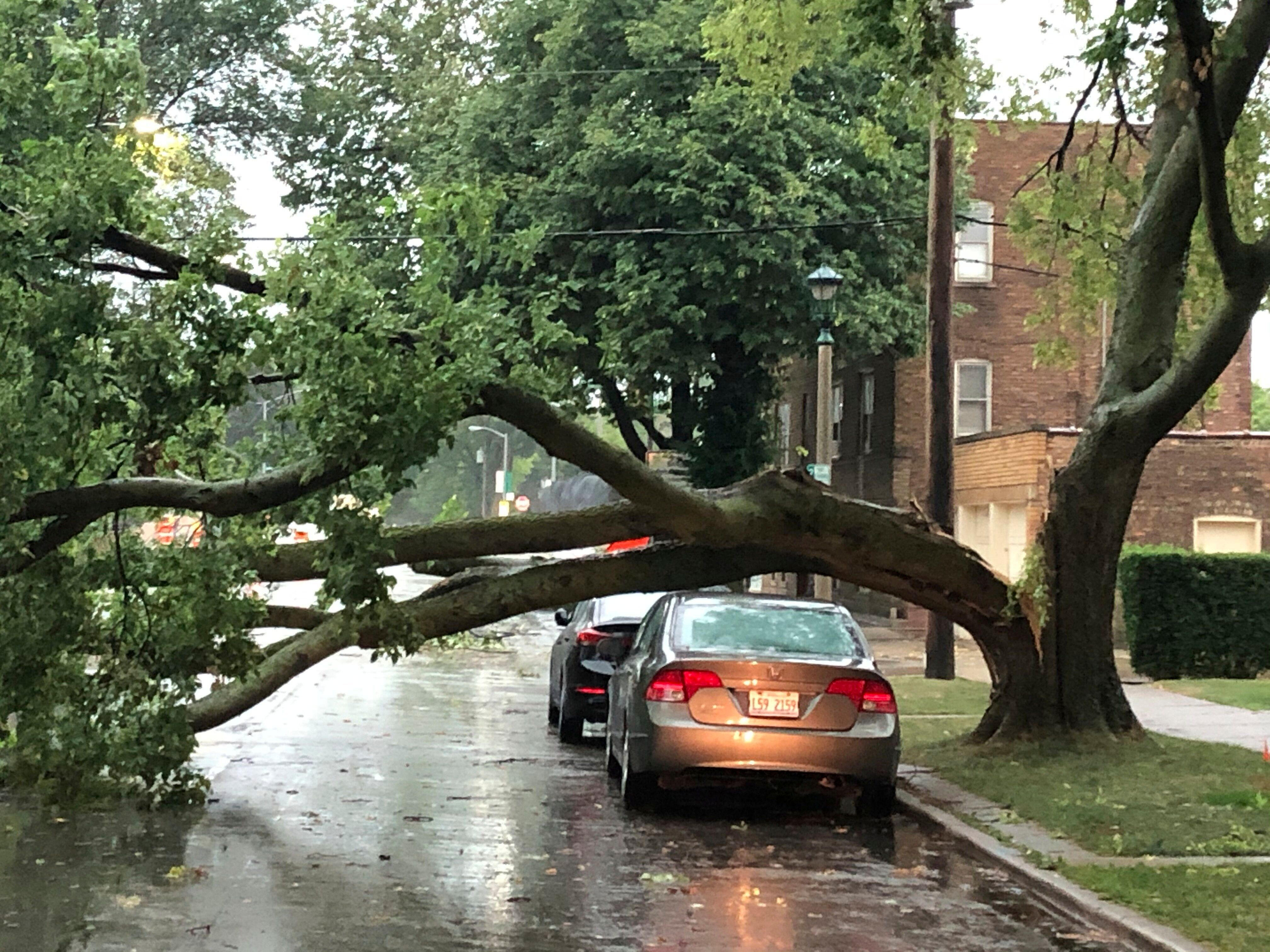 Part of a tree that had split at the trunk lies on a road in Oak Park, Ill., while also appearing not to have landed on a car