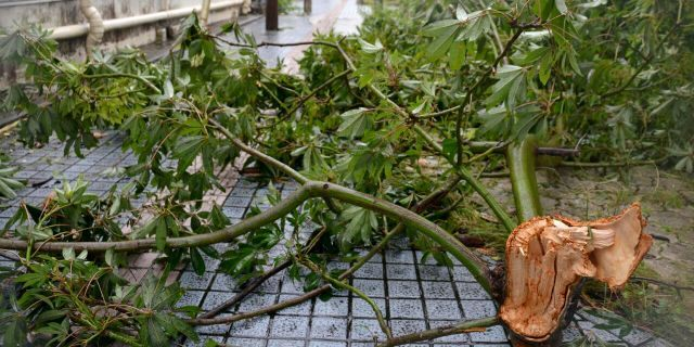 A broken tree blocks a road as a powerful typhoon blew over Naha city, Okinawa, southern Japan Tuesday, Sept. 1, 2020.