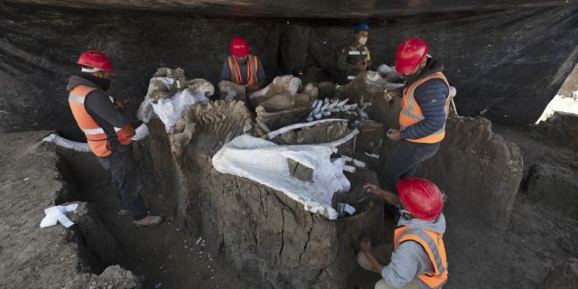 Paleontologists work to preserve the skeleton of a mammoth that was discovered at the construction site of Mexico City's new airport in the Santa Lucia military base, Mexico, Thursday, Sept. 3, 2020. (AP Photo/Marco Ugarte)