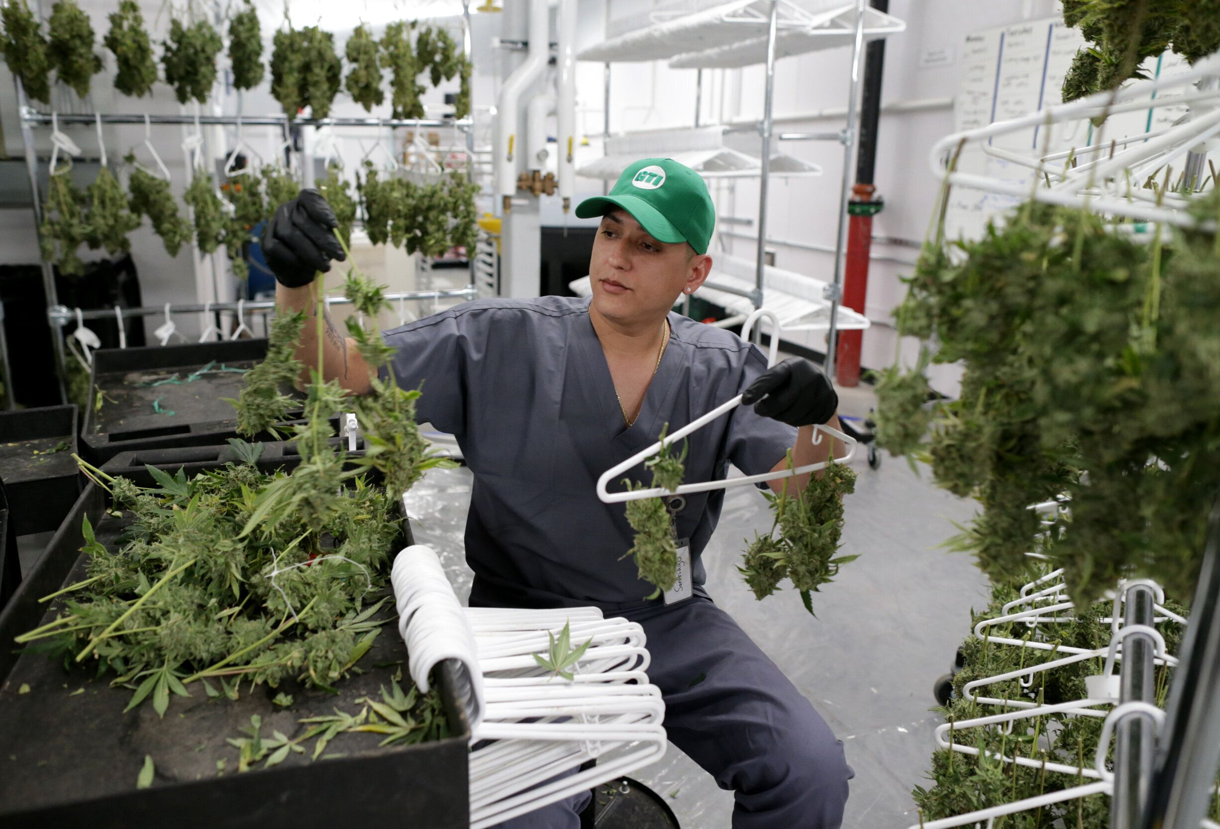 Jonell Santiago works at Green Thumb Industries cultivation center in Holyoke on Jan. 31, 2019. Mayor Alex Morse recruited th