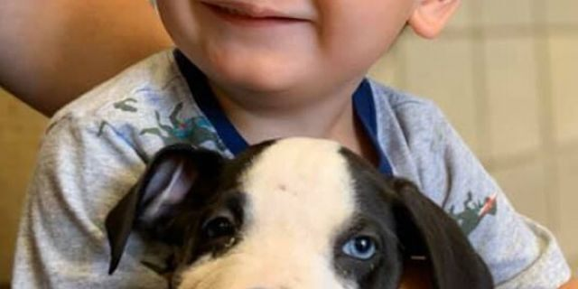 Little Bentley has undergone two surgeries for his cleft lip, and his mom hopes that growing up with Lacey will teach him confidence.
