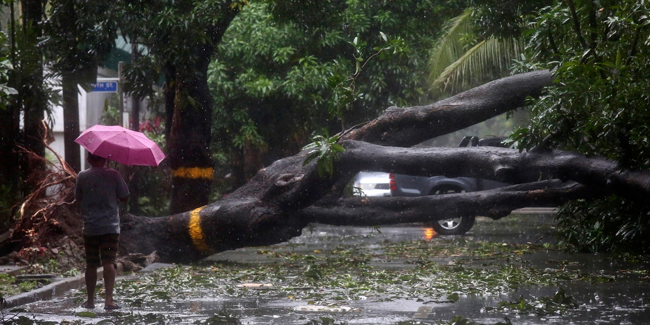 A man walks beside a toppled tree in Quezon city, the Philippines, as Typhoon Vamco hit the city, Thursday, Nov. 12, 2020.