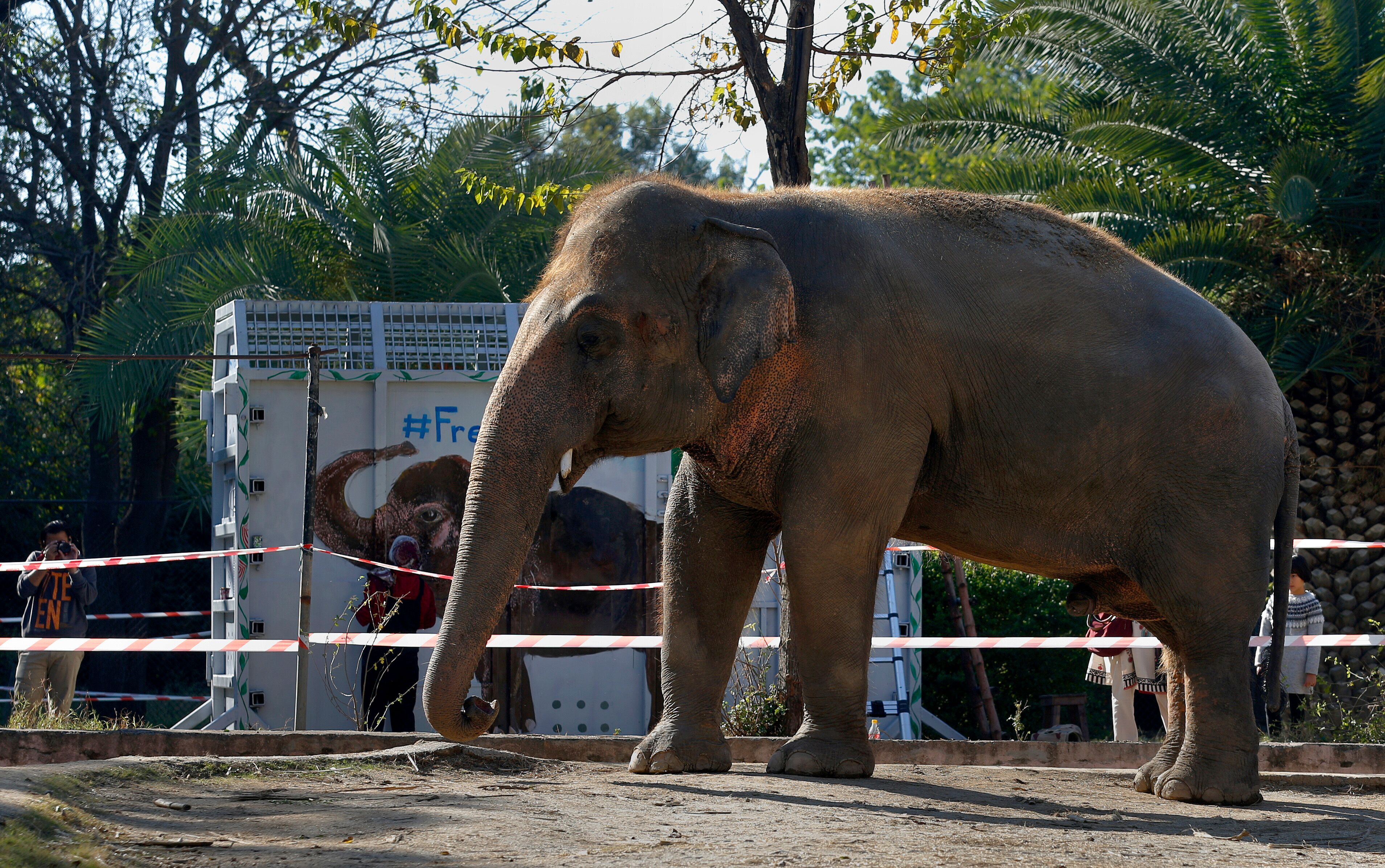 Kaavan is seen before guided into the crate, which will transport him to a sanctuary in Cambodia.