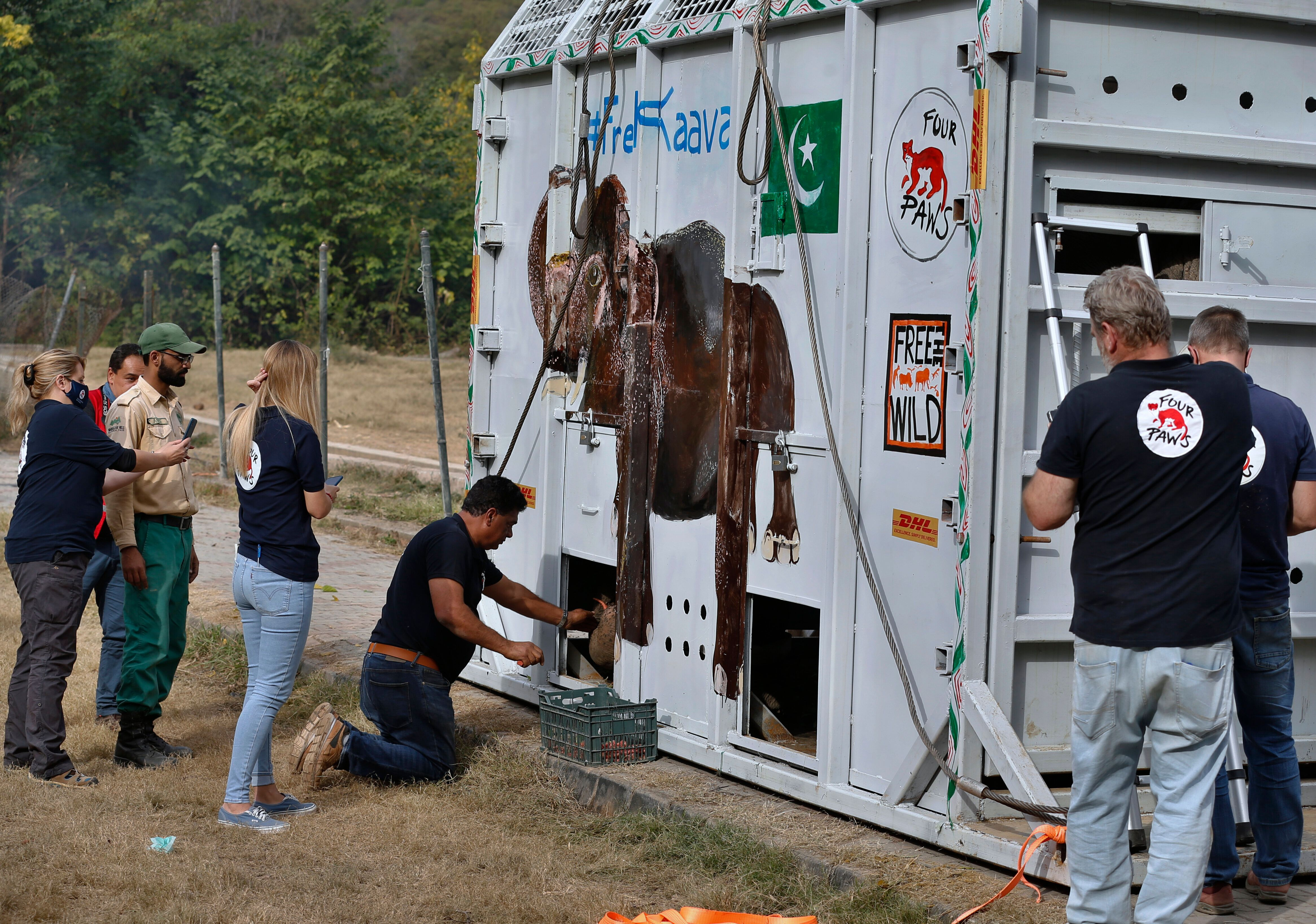 Dr. Khalil feeds Kaavan ahead of his incredible journey to Cambodia.