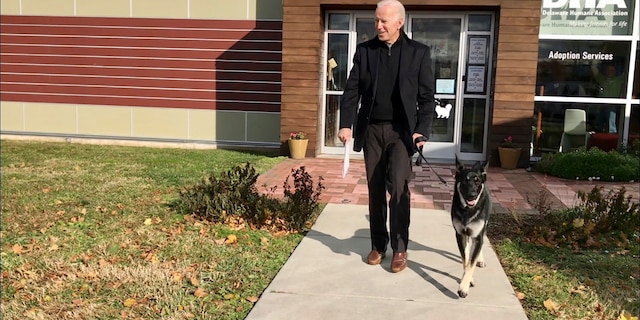 In this Nov. 16, 2018 photo from the Delaware Humane Association, Joe Biden walks with his his newly-adopted German shepherd Major, in Wilmington, Del. (Stephanie Carter/Delaware Humane Association via AP)