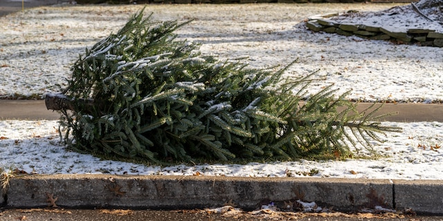 """""""Most, if not all, county and city governments offer real Christmas tree pick up or drop off locations,"""" the expert said."""