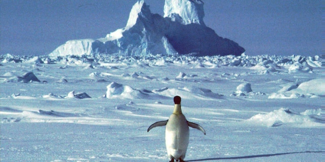 Antarctica experienced its single hottest day ever recorded this month, hitting a high of 69.35 degrees Fahrenheit on Feb. 9, according to Argentine researchers.