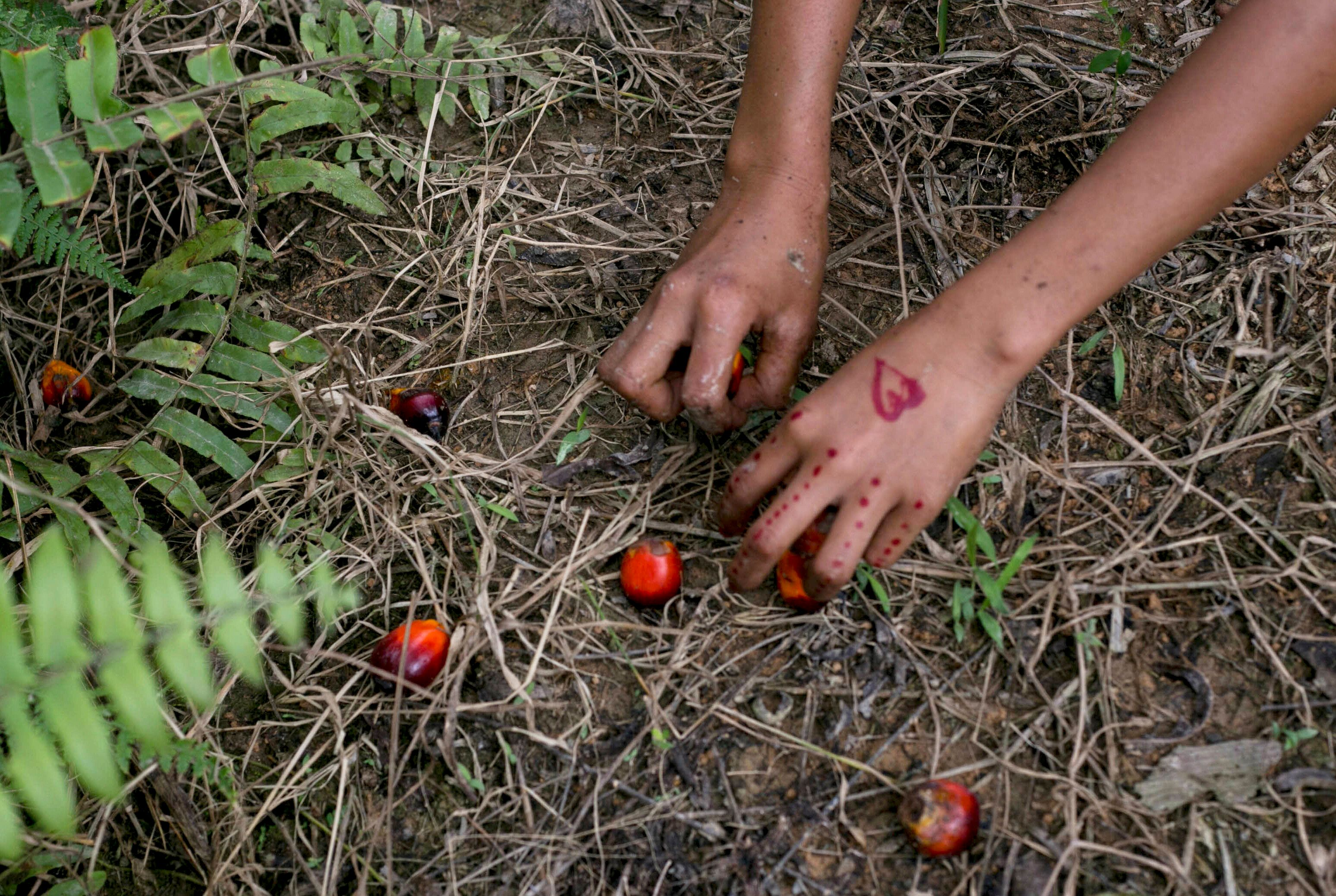 A child collects palm kernels from the ground at a palm oil plantation in Sumatra, Indonesia. Indonesia is the world's larges