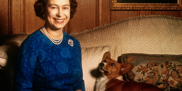 Queen Elizabeth II smiles with a pet corgi at Sandringham House in this 1970 photo.(Getty Images)