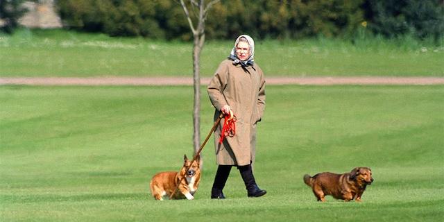 Queen Elizabeth walks her dogs at Windsor Castle in this 1994 photo.