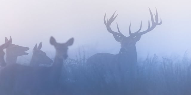 """According to a<a href=""""https://www.media.pa.gov/Pages/game-commission-details.aspx?newsid=459"""" target=""""_blank"""">press release</a> from the commission, the 2020-21 harvest of 435,180 deer topped the previous year's harvest of 389,431."""