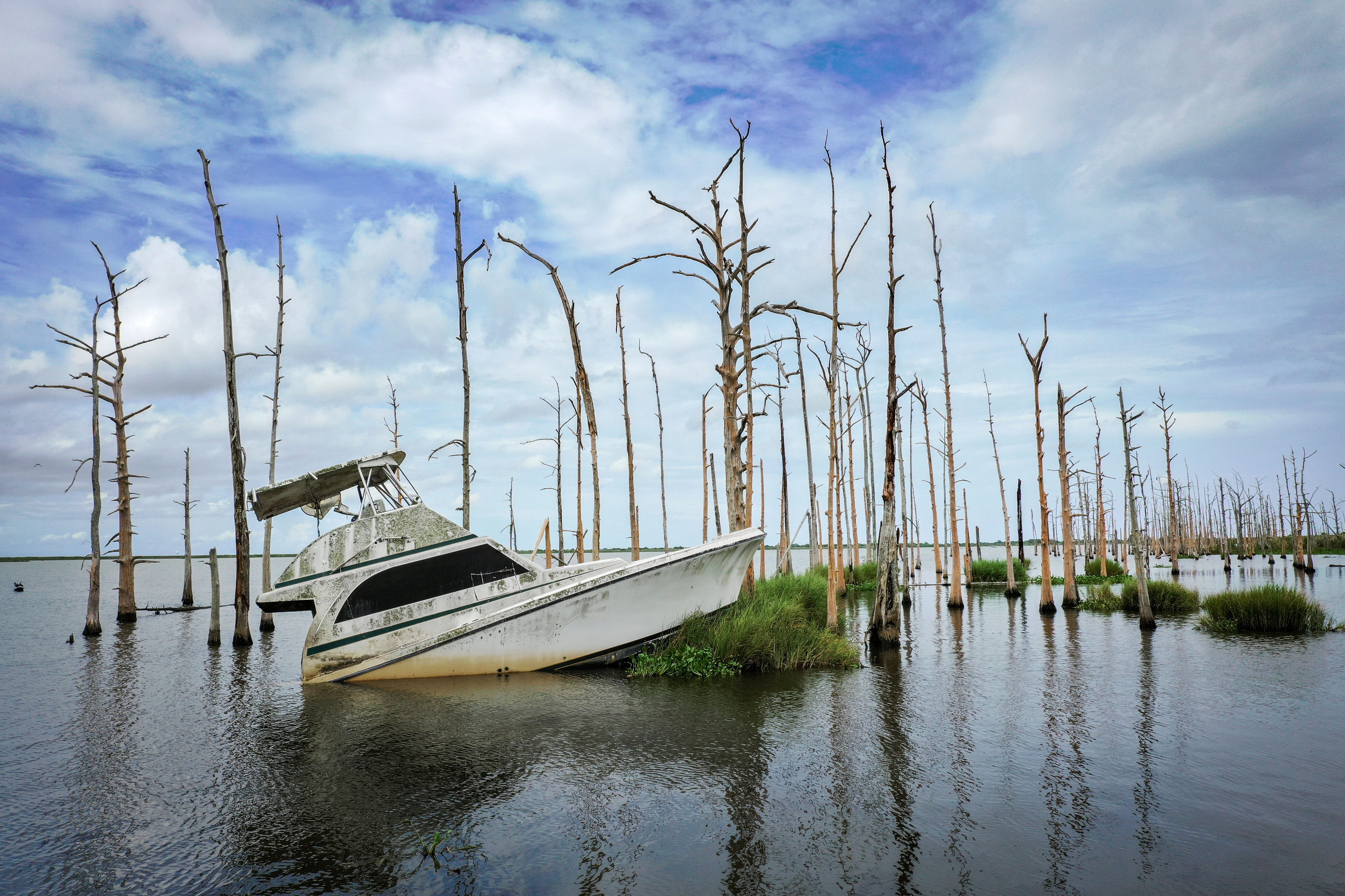 An abandoned boat sitsamid dead cypresses in coastal waters off Venice, Louisiana, in August 2019. Many oaks and cypress tree