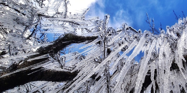 Ice blankets trees at dawn during a cold snap in Sao Joaquim, Brazil, Wednesday, July 28, 2021. A fierce cold snap on Wednesday night prompted snowfall in southern Brazil where such weather is a phenomenon. (AP Photo/Mycchel Legnaghi)