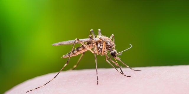 WNV is spread primarily through mosquito bites.